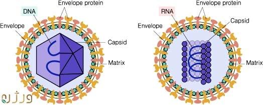 ساختار ویروس