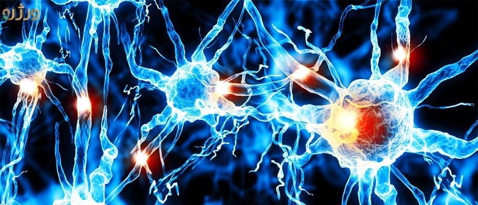 ارتباط بین سلول های عصبی در بیماری ام اس